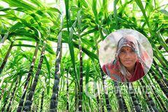 'Видаляли матку!' Стало відомо про 'тортури' над працюючими жінками в Індії