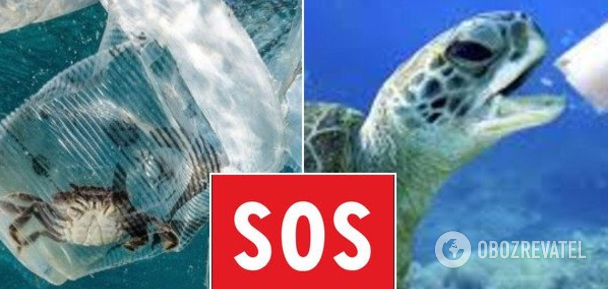 Очистити океан від пластику: названий спосіб