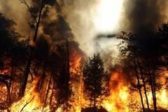 'Уже не остановить': озвучен страшный прогноз по пожарам в Сибири