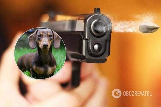 Стрілянина в Києві, в якій загинула собака