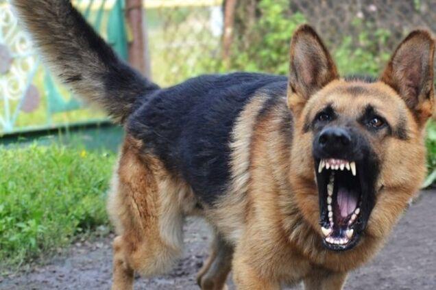 Під Дніпром собака напав на жінку з дитиною