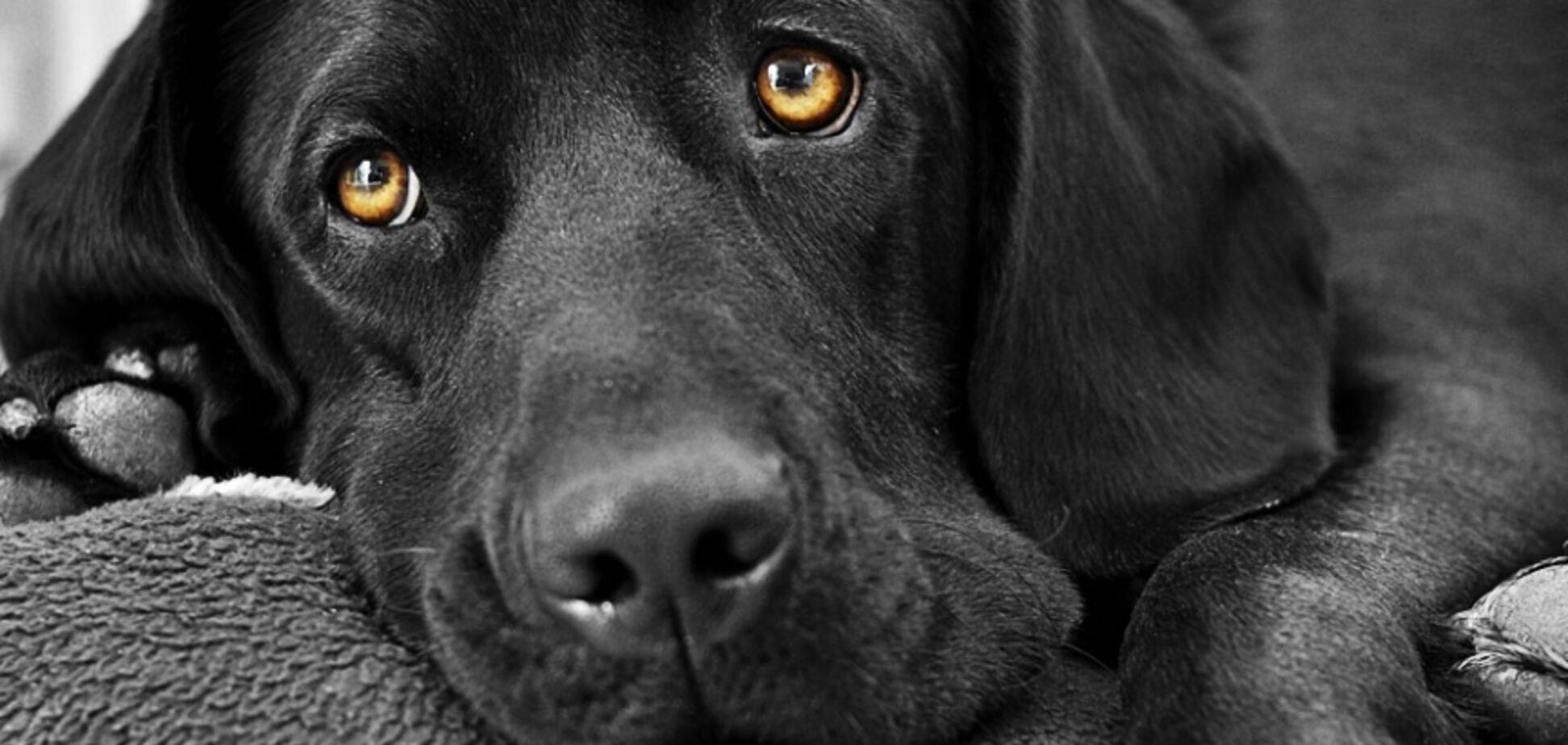 'Тотальне пекло': в Дніпрі жінка тримала в квартирі собак в жахливих умовах