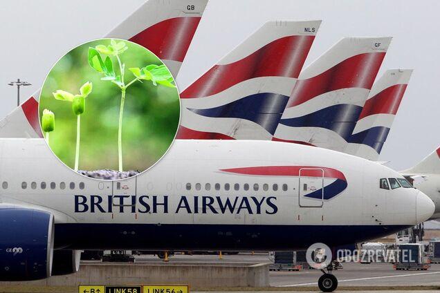 Ради уменьшения выбросов авиакомпании переходят на биотопливо
