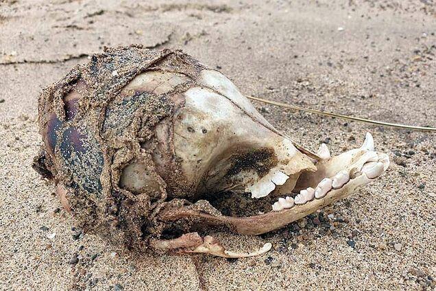 Женщина нашла череп странного существа