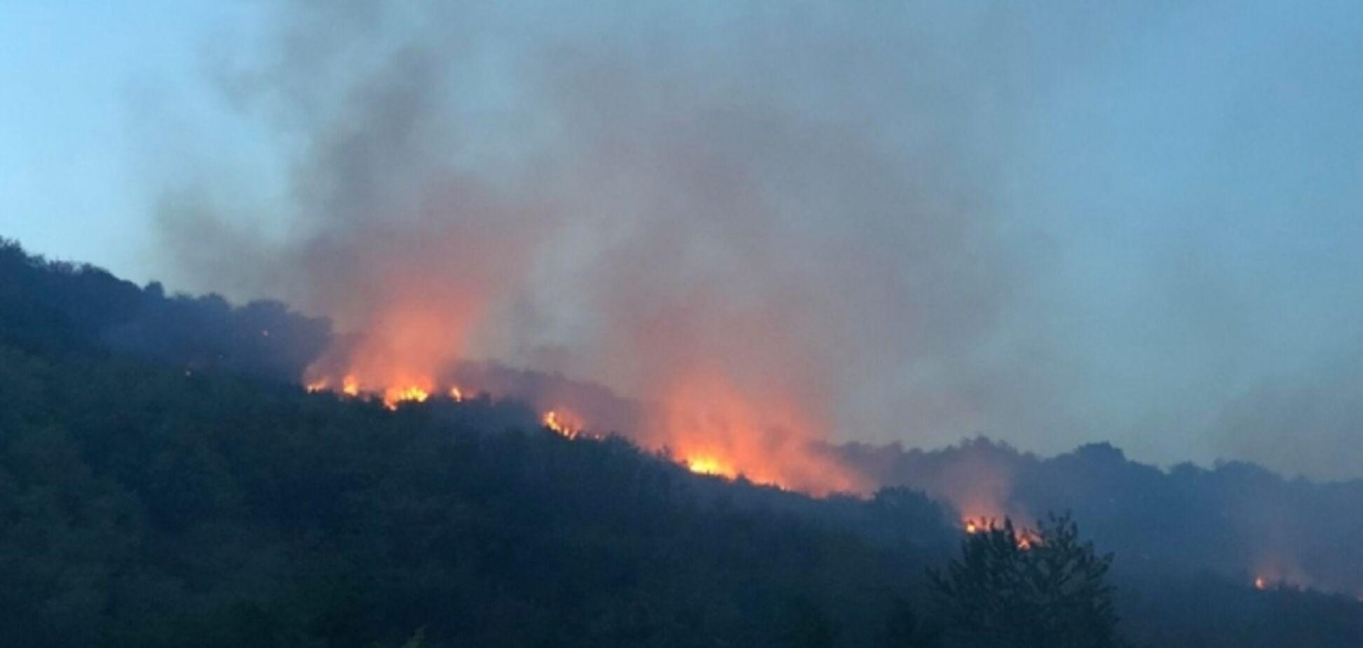 На Закарпатті потужна пожежа підібралася до лісу: фото вогняного Армагеддону
