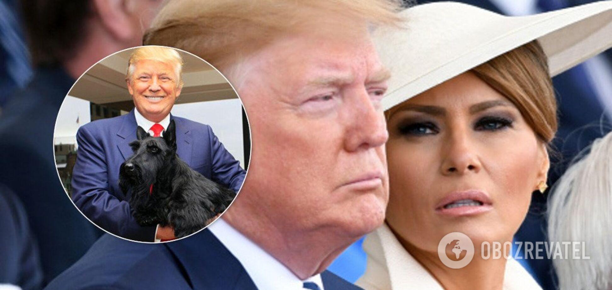 'Підкликає, як собаку': Трамп обурив соцмережі хамським поводженням із дружиною