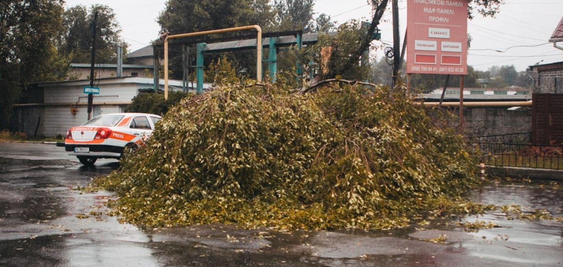 У Дніпрі через буревій дерево звалилося на авто