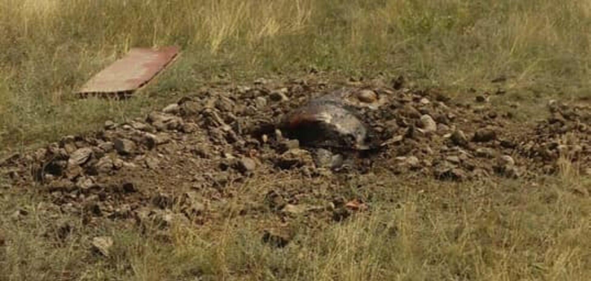 Введено карантин: під Дніпром в скотомогильнику знайдений небезпечний вірус