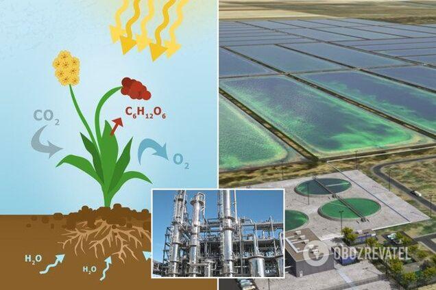 Энергия из биомассы - тренд новой энергетики