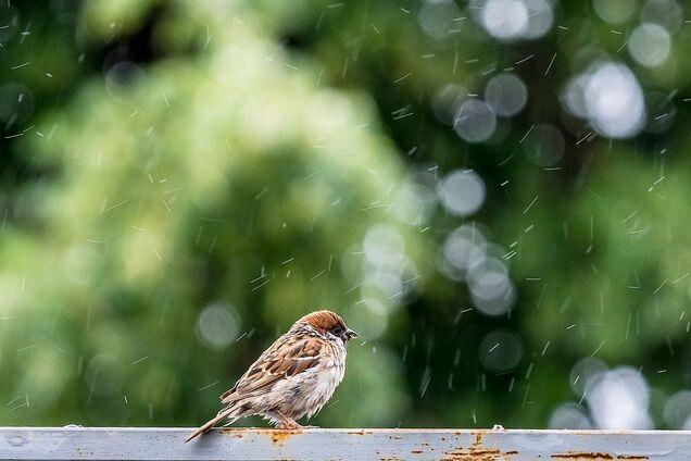 Лето - дождь - праздник