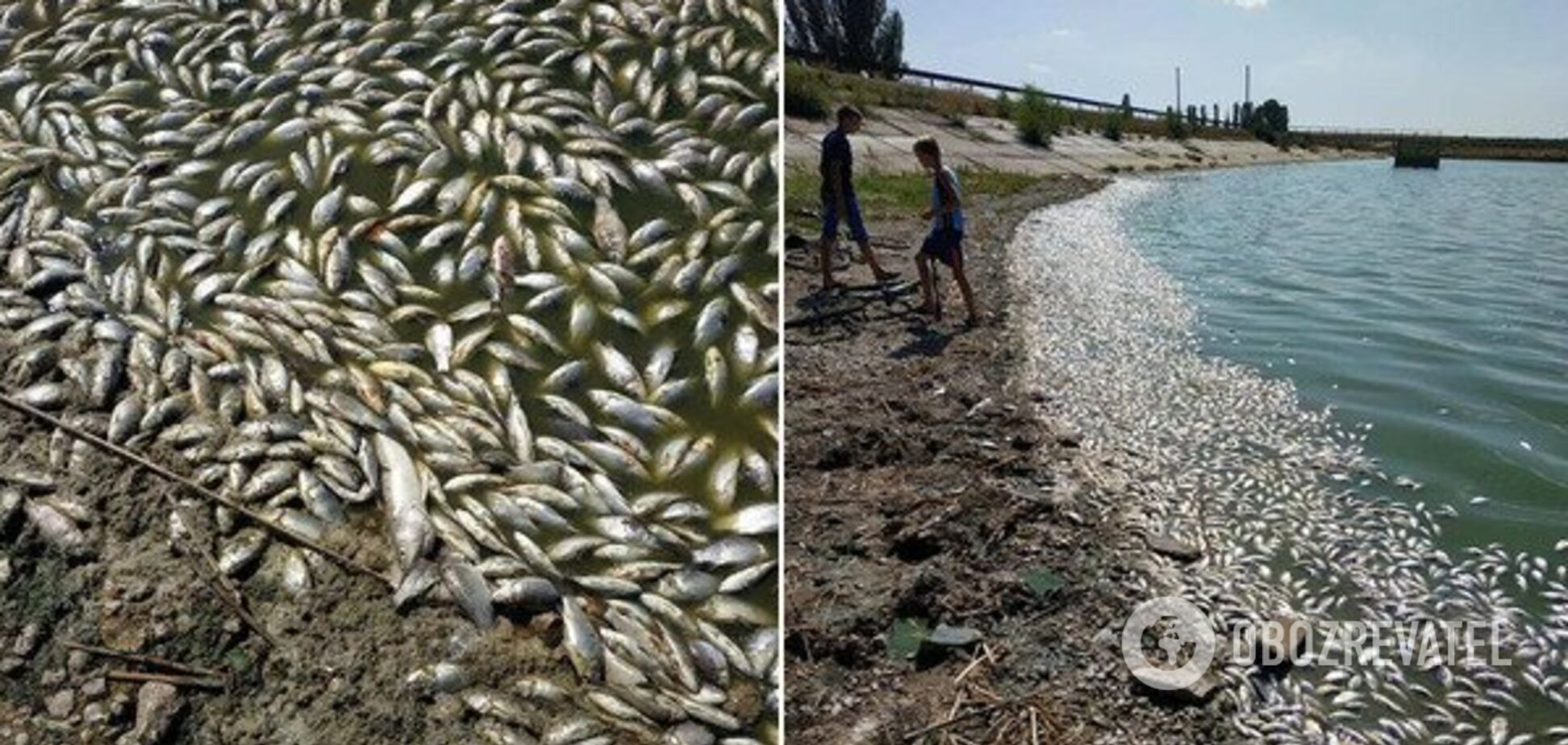 Екологічна катастрофа: під Дніпром масово гине риба. Фото