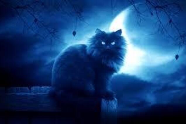 Черный кот и пятница, 13-е. Иллюстрация