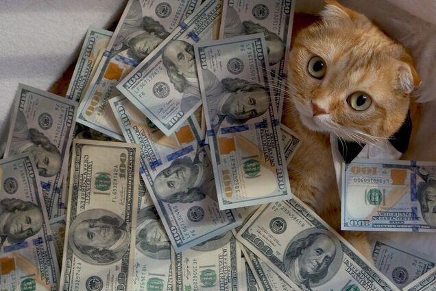 Долларовый кот, иллюстрация