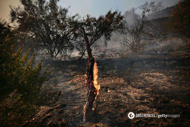 Эколог назвал причину пожара на торфяниках под Киевом