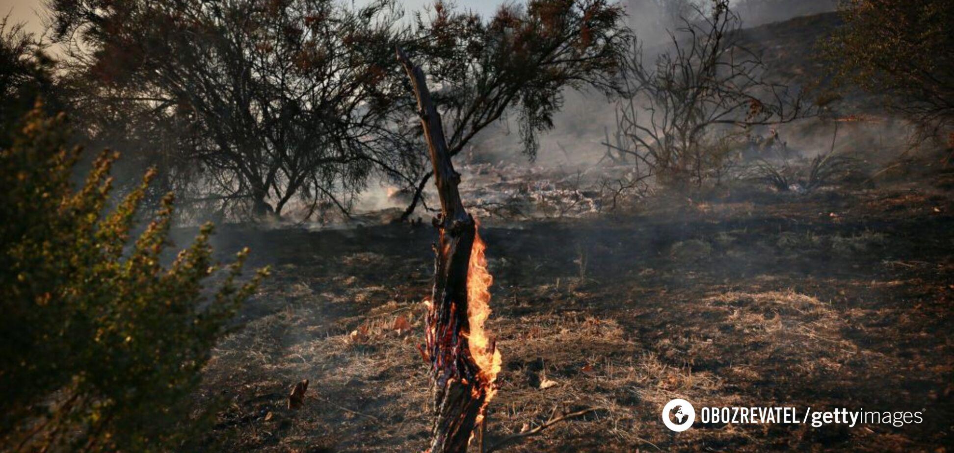 Киев задыхается от смога: эколог назвал причину пожара на торфяниках