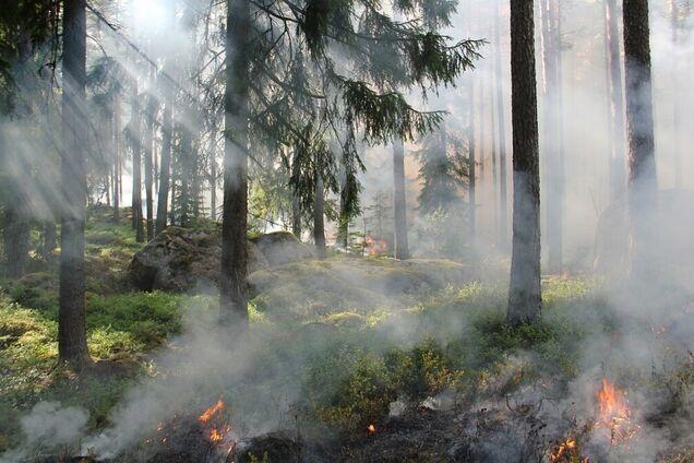 Лесной пожар, иллюстрация