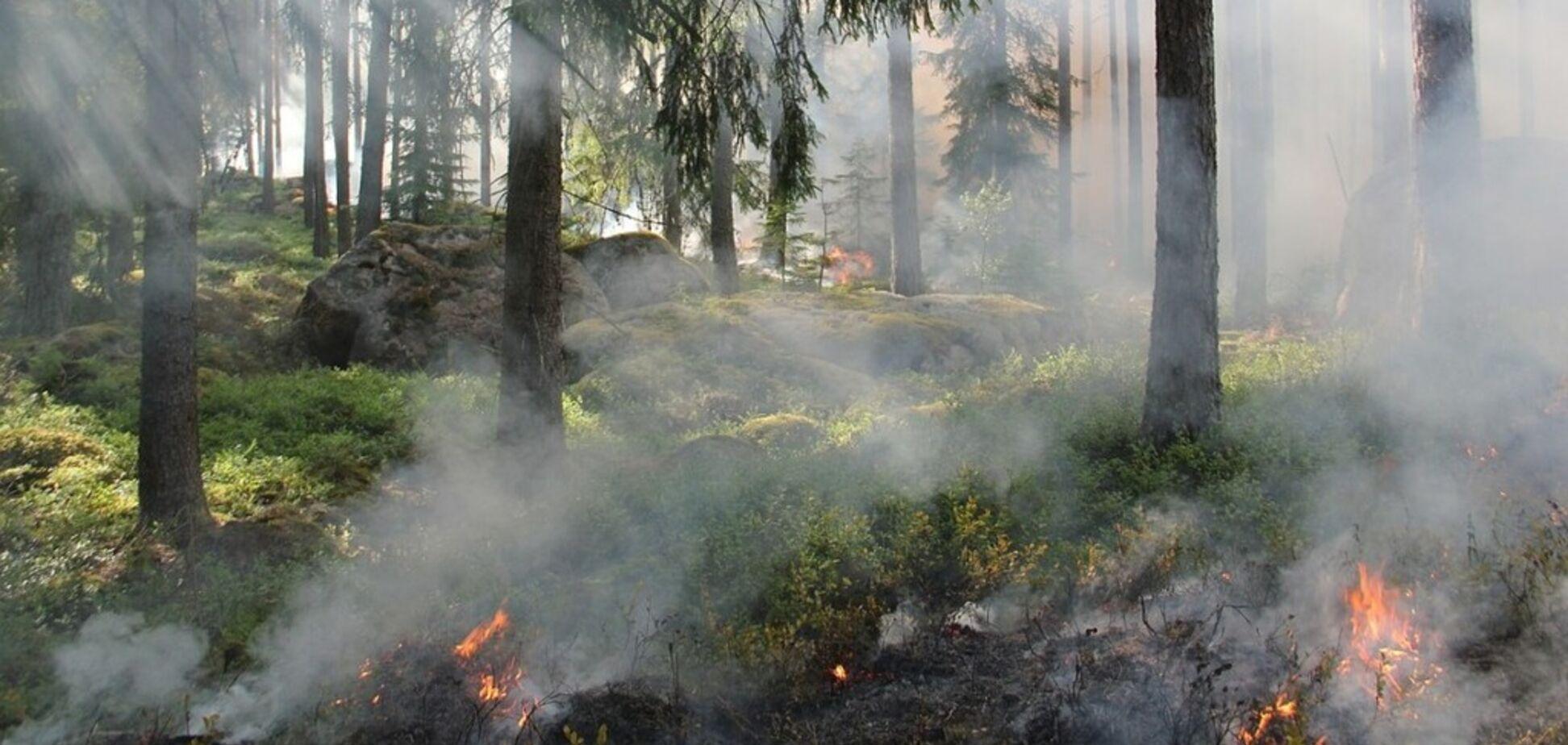 На Киевщине горят торфяники: жители забили тревогу из-за тошноты и бессонницы
