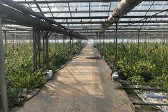 'Это жесть! Никто не поверит!' появилось видео с рекордной в Украине плантации конопли