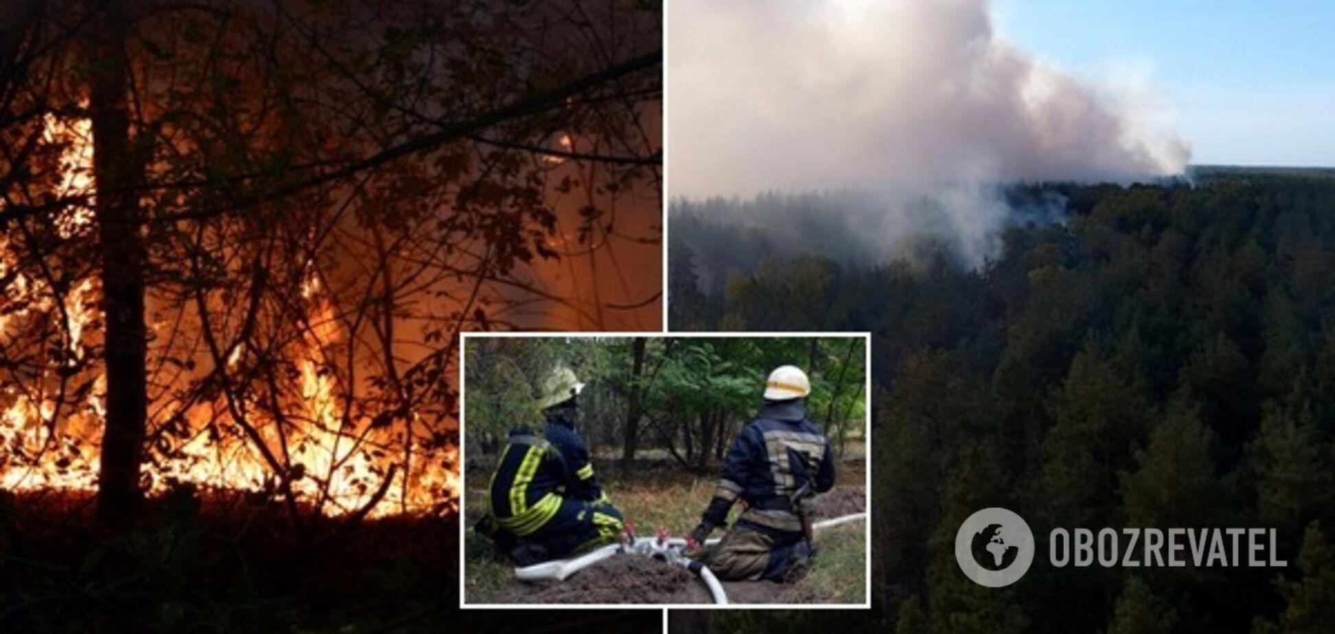 На Дніпропетровщині спалахнула масштабна лісова пожежа: фото і відео НП