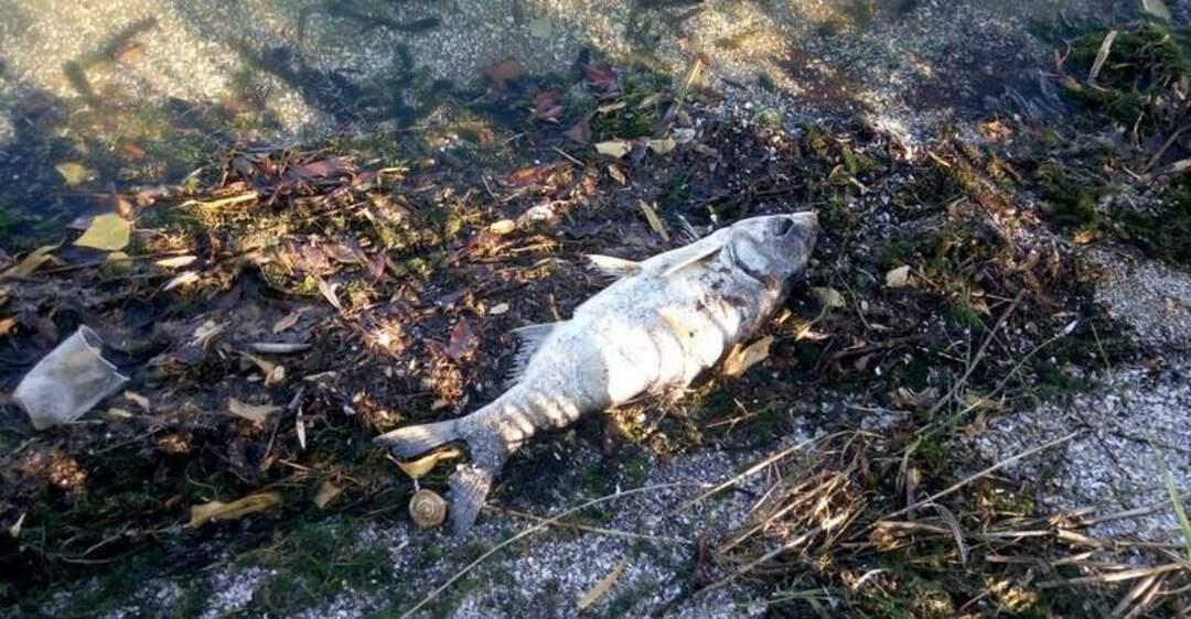 любого героев фото рыбы реки днепр мировых рынках
