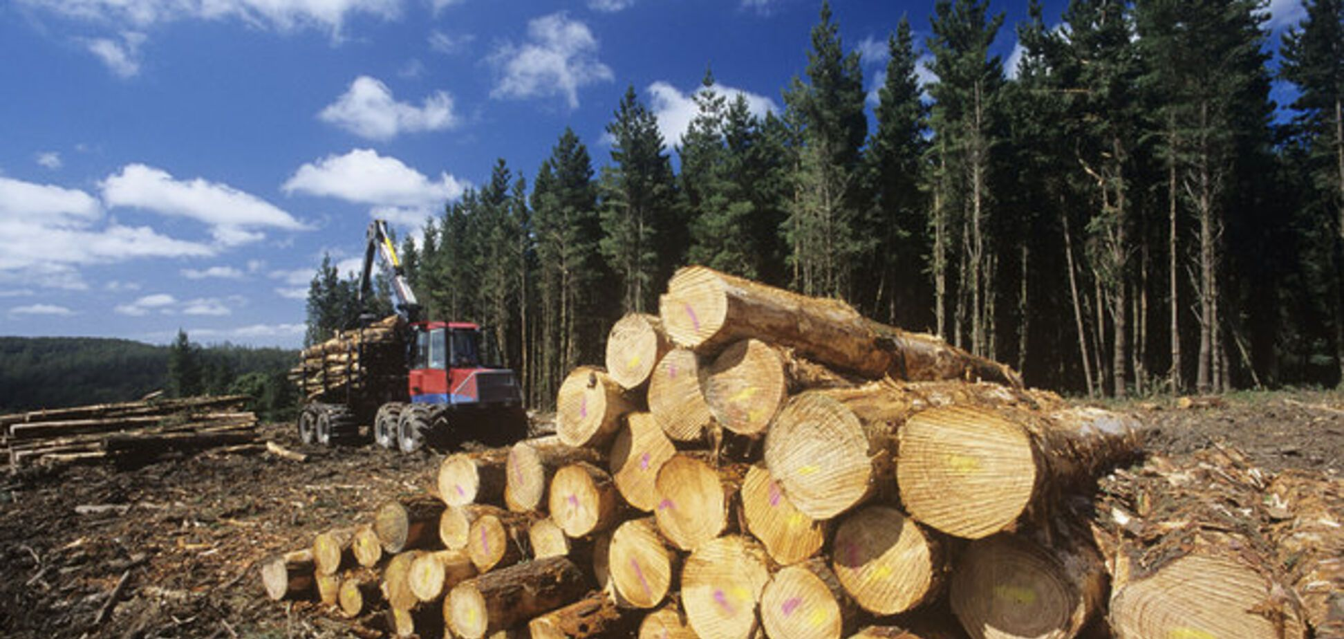 Украина готова отменить мораторий на экспорт леса