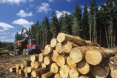 Україна готова скасувати мораторій на експорт лісу