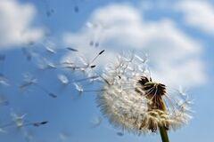 Alex тест: быстрая и качественная диагностика аллергии