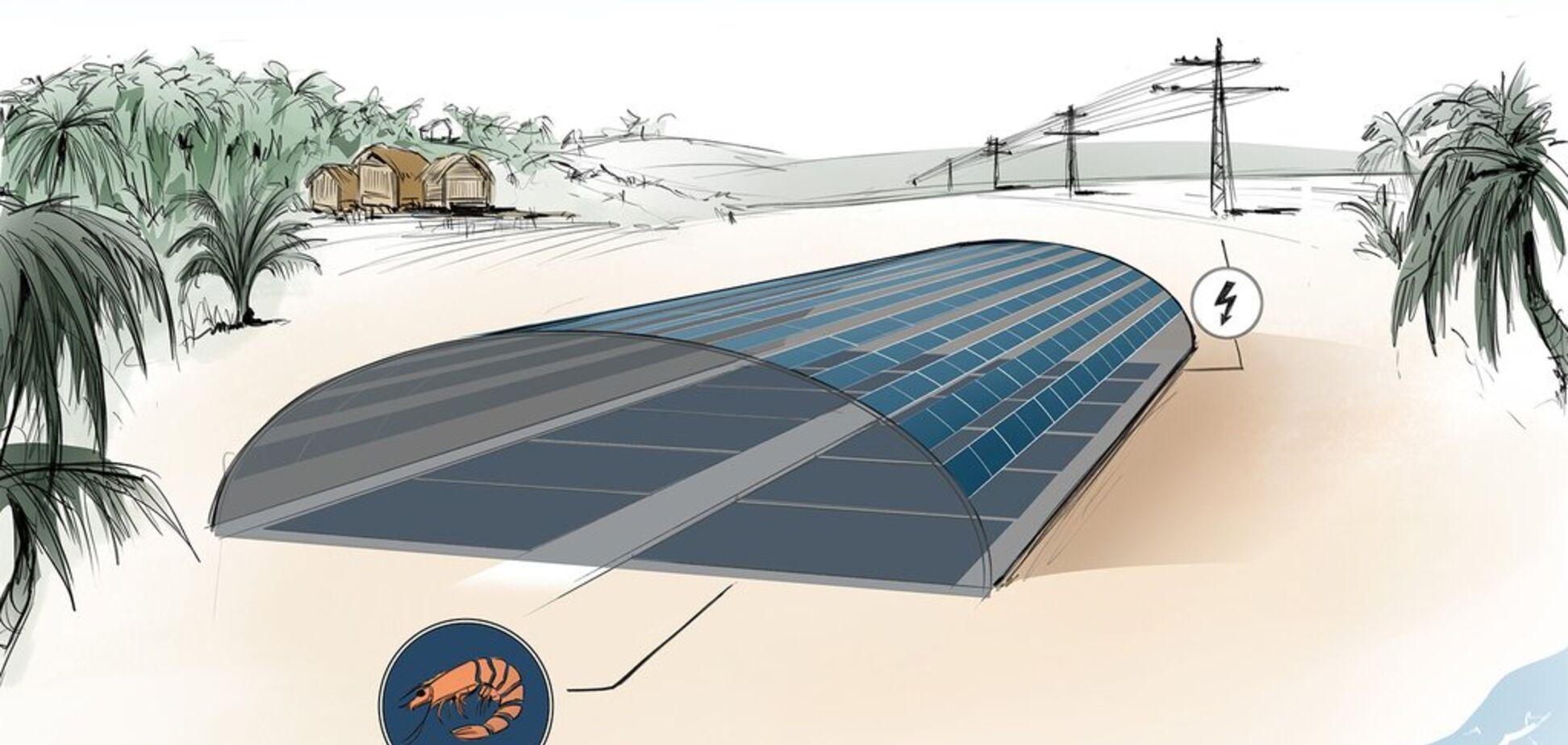 Инженеры научились добывать солнечную энергию с помощью рыб: как это работает