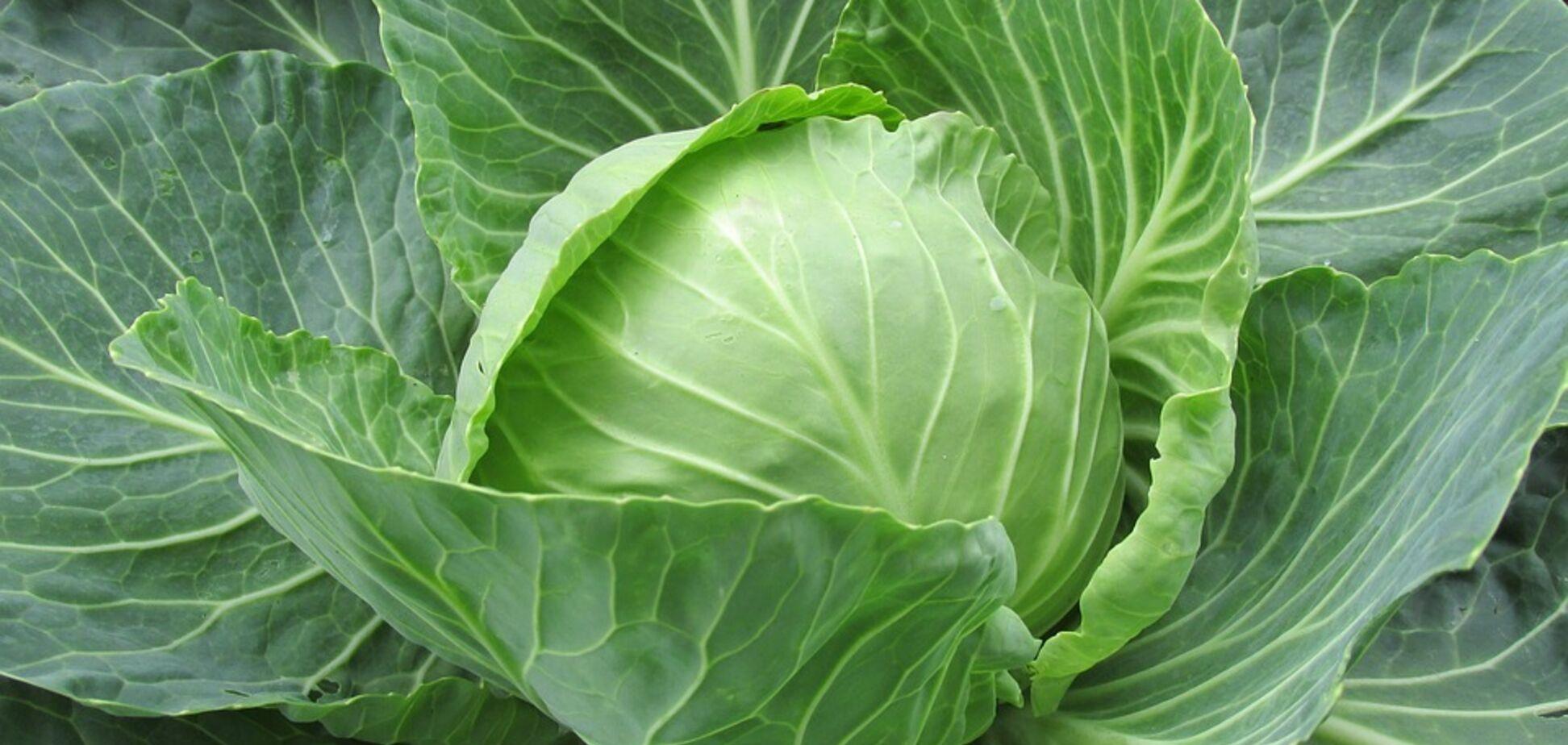 Рецепт вкуснейшего салата из капусты