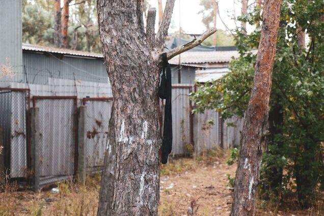 В Киеве нашли висящий на дереве труп