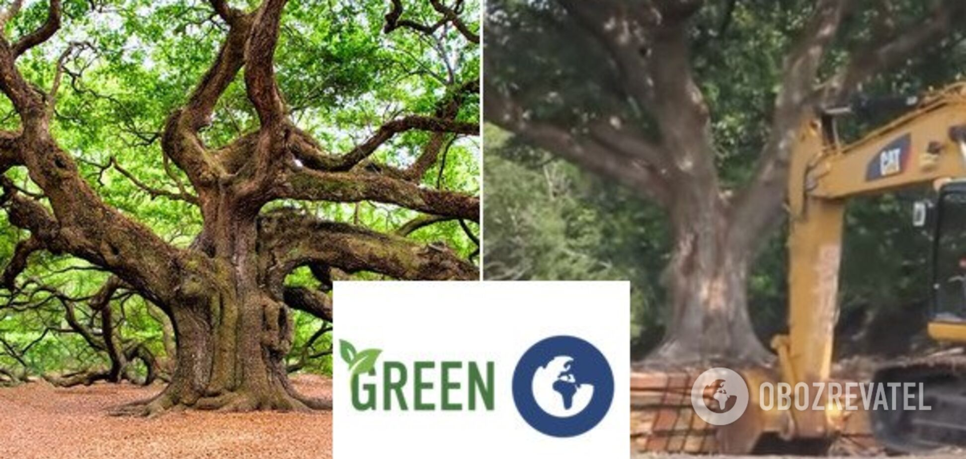 Как в мире сохраняют деревья: появилось впечатляющее видео