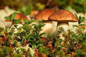 Не ловить рыбу, не собирать грибы: эколог заявил об опасной зоне вблизи полигона в РФ