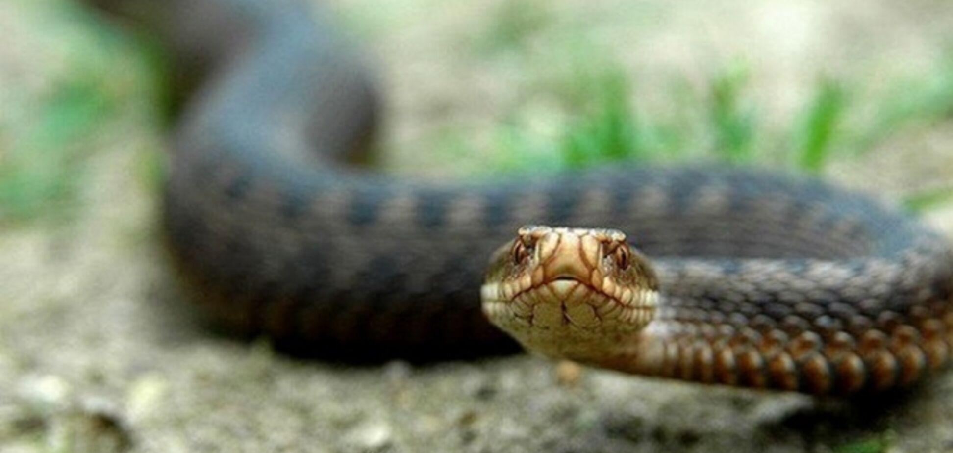 Довелося викликати рятувальників: в Дніпрі змія заповзла у відділення пошти