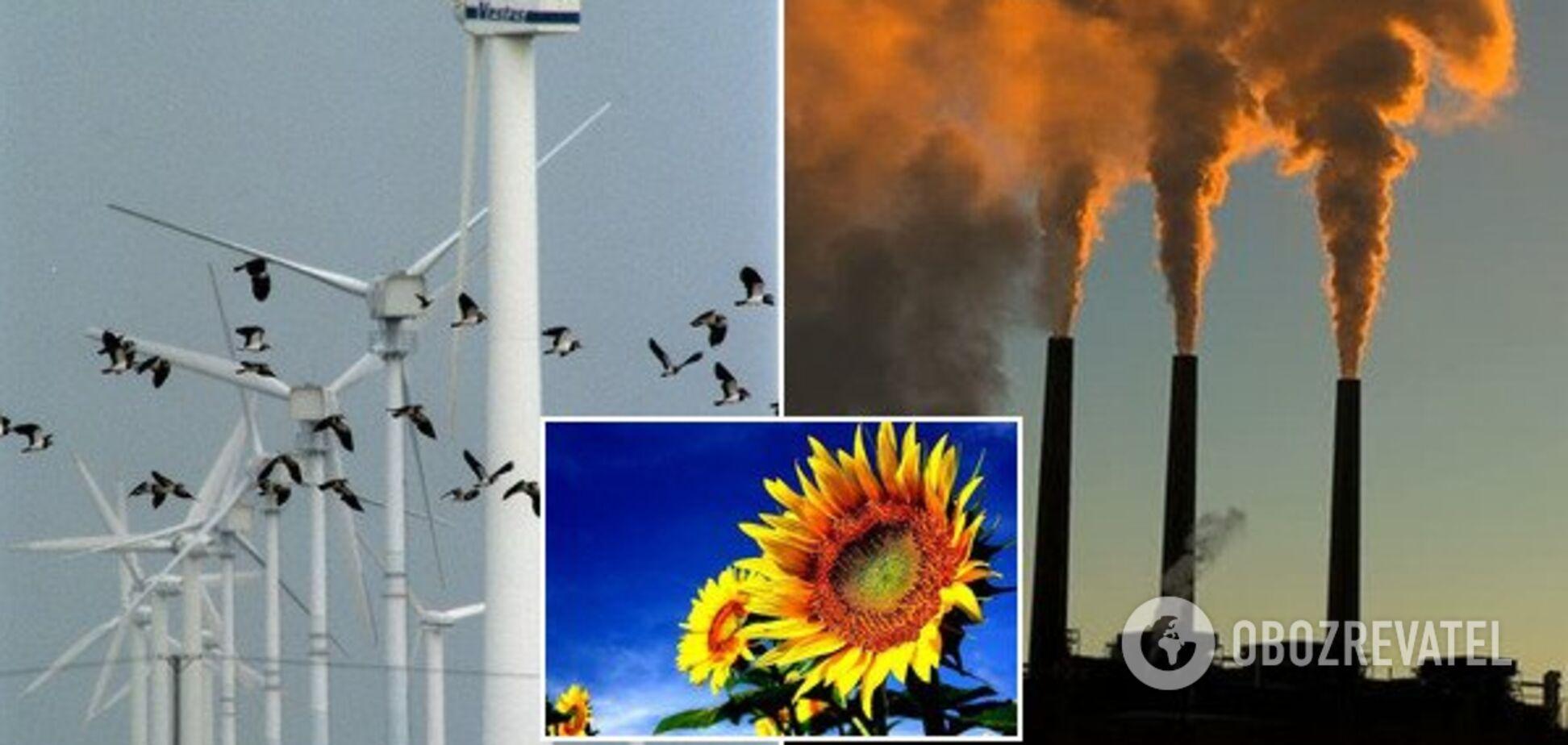 Тотальні витрати і загибель птахів: розкрито несподівані мінуси 'зеленої' енергетики