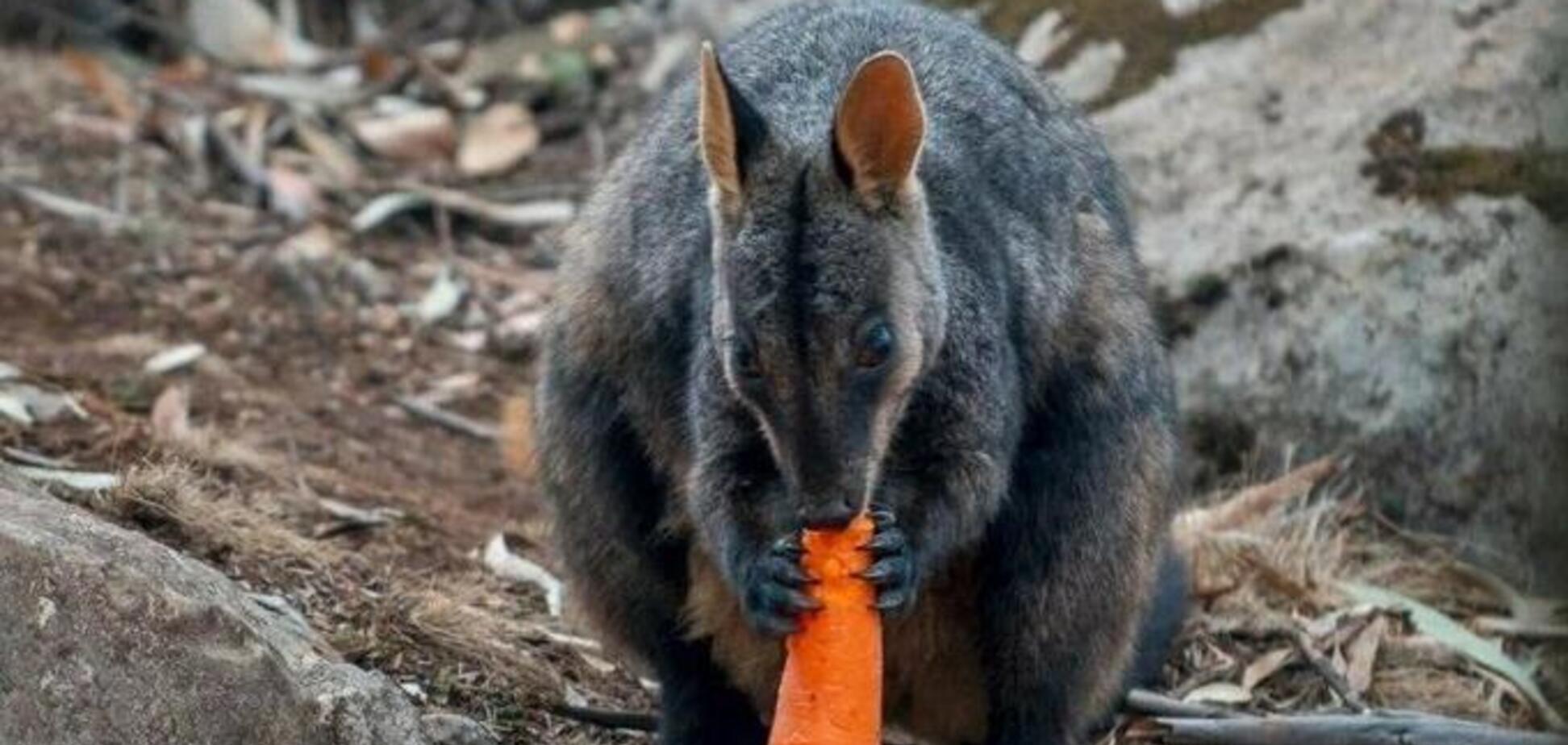 В Австралии еду для животных доставили вертолетами: милые фото и видео