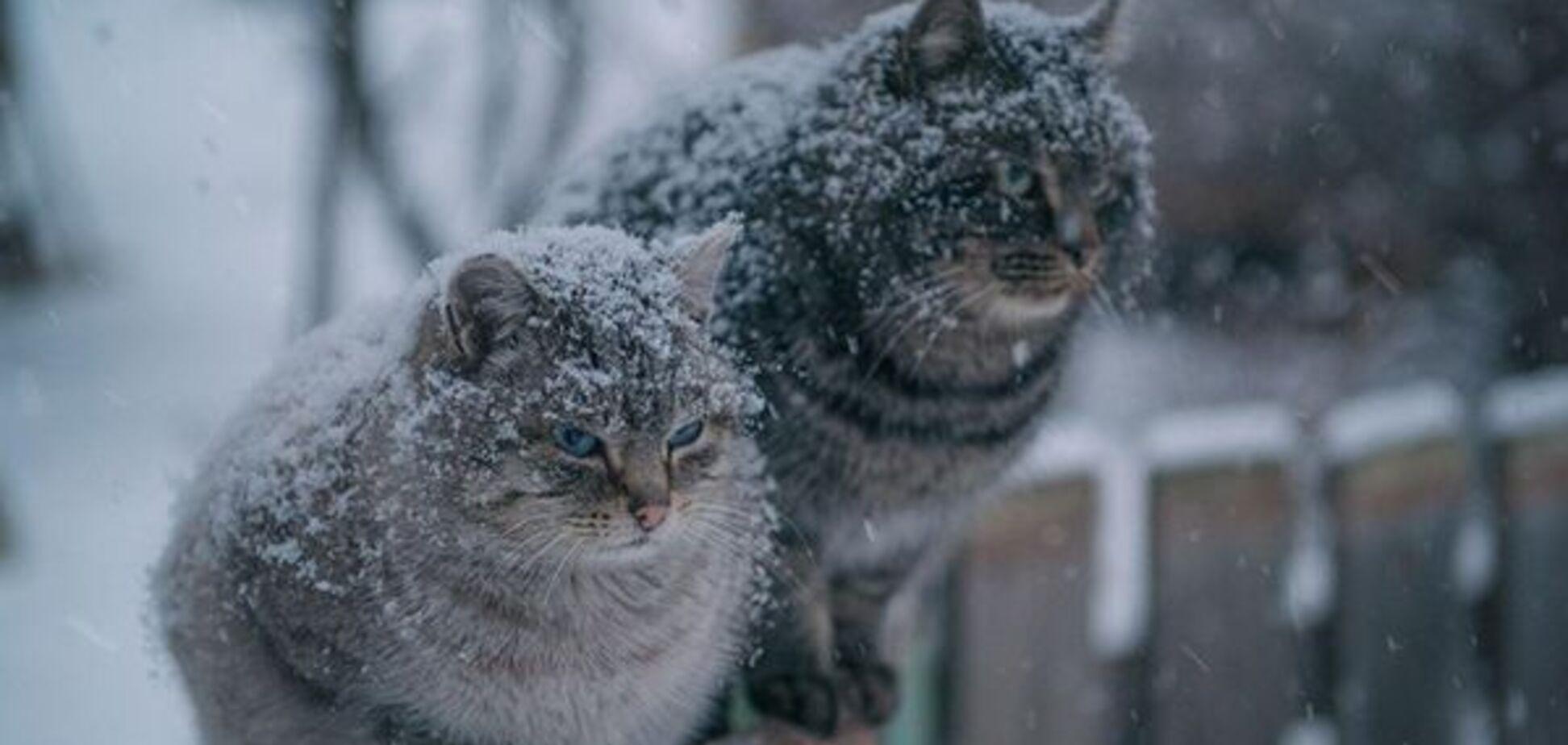 Теплую погоду в Украине сменят сильные морозы: синоптики назвали дату