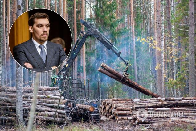 Гончарук объявил войну вырубке леса