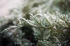 Приметы и праздники 17 января: что нельзя делать в этот день