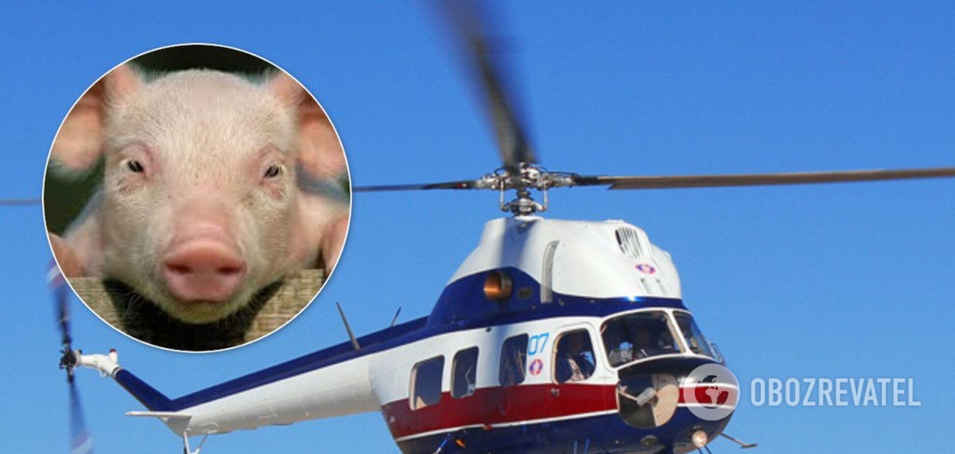 В бассейн миллионера с вертолета сбросили свинью. Видео