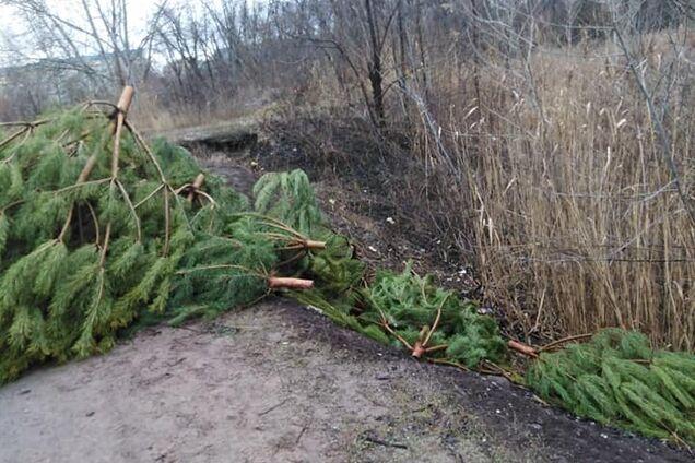 В Днепре выбросили большое количество елок