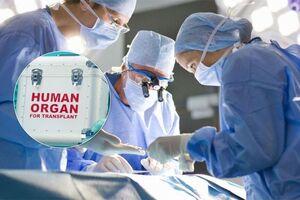 Сердце за полмиллиона и электронный список доноров: что украинцам ожидать от закона о трансплантации
