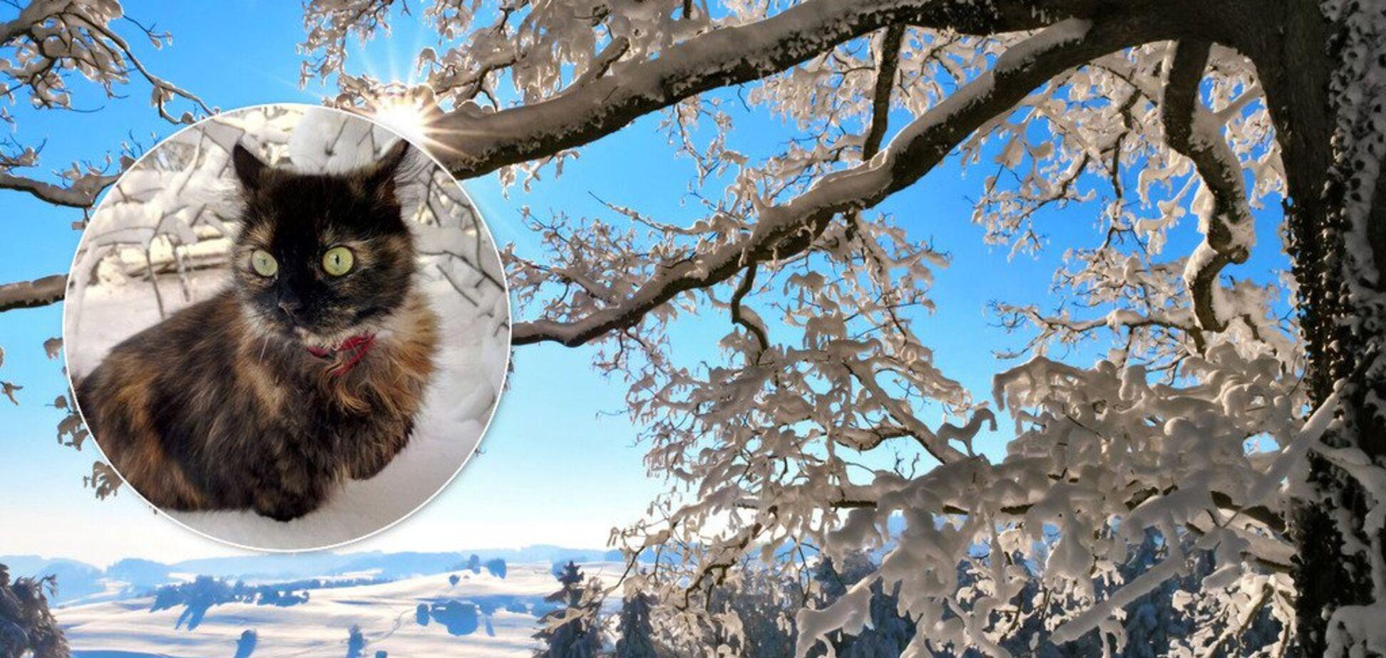 Мороз до -27: Гидрометцентр оценил скандальный прогноз погоды на январь