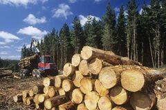 В Кабмине хотят разрешить продавать лес за границу: экс-нардеп указал на ужасные последствия