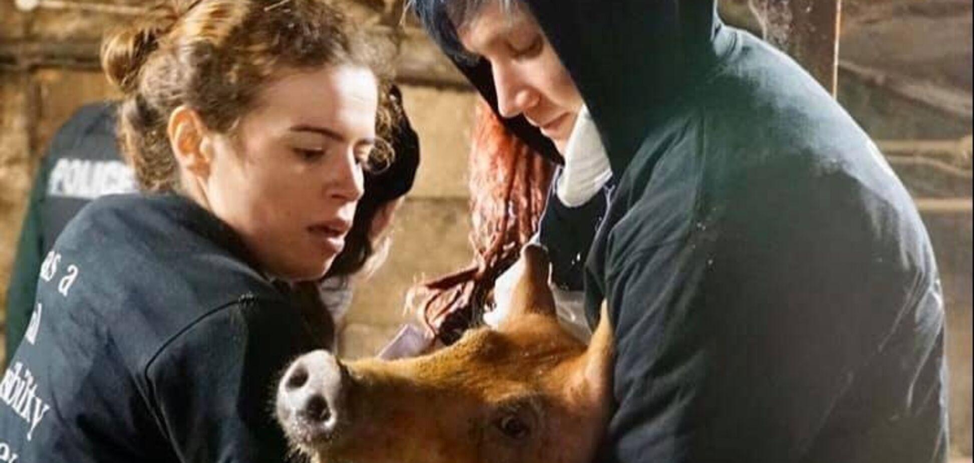 'Тихо пхикали, коли їх їли живцем': свині-канібали потрапили на відео. Моторошні фото 18+