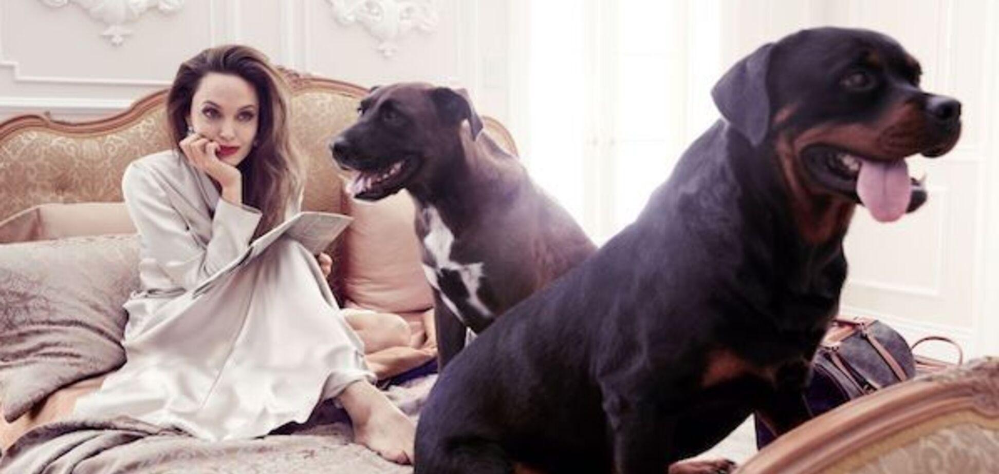 Брэд Питт подал в суд на Анжелину Джоли из-за собак – СМИ