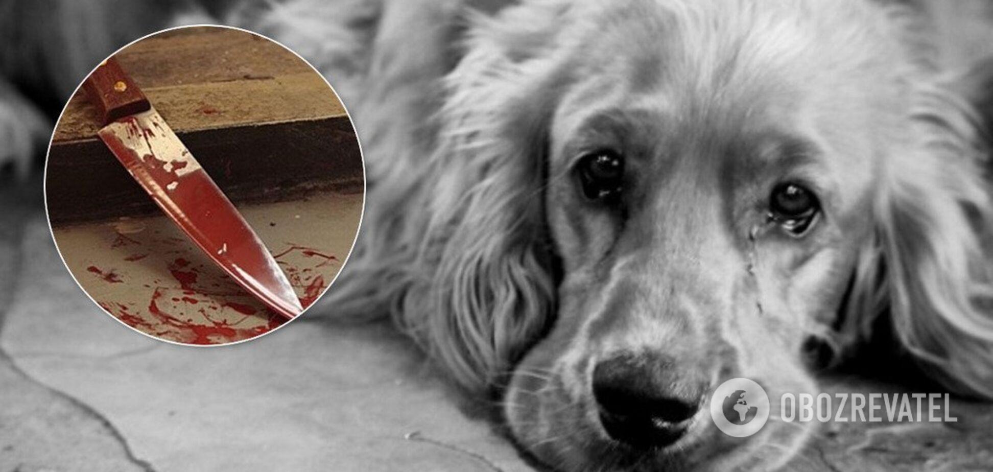 Перерізав шиї собакам: на Дніпропетровщині затримали жорстокого шкуродера