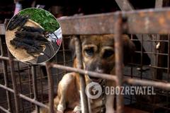Коронавирус: сеть напугал рынок в Индонезии