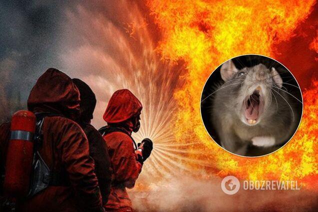 Около сотни животных погибли во время пожара в Днепре