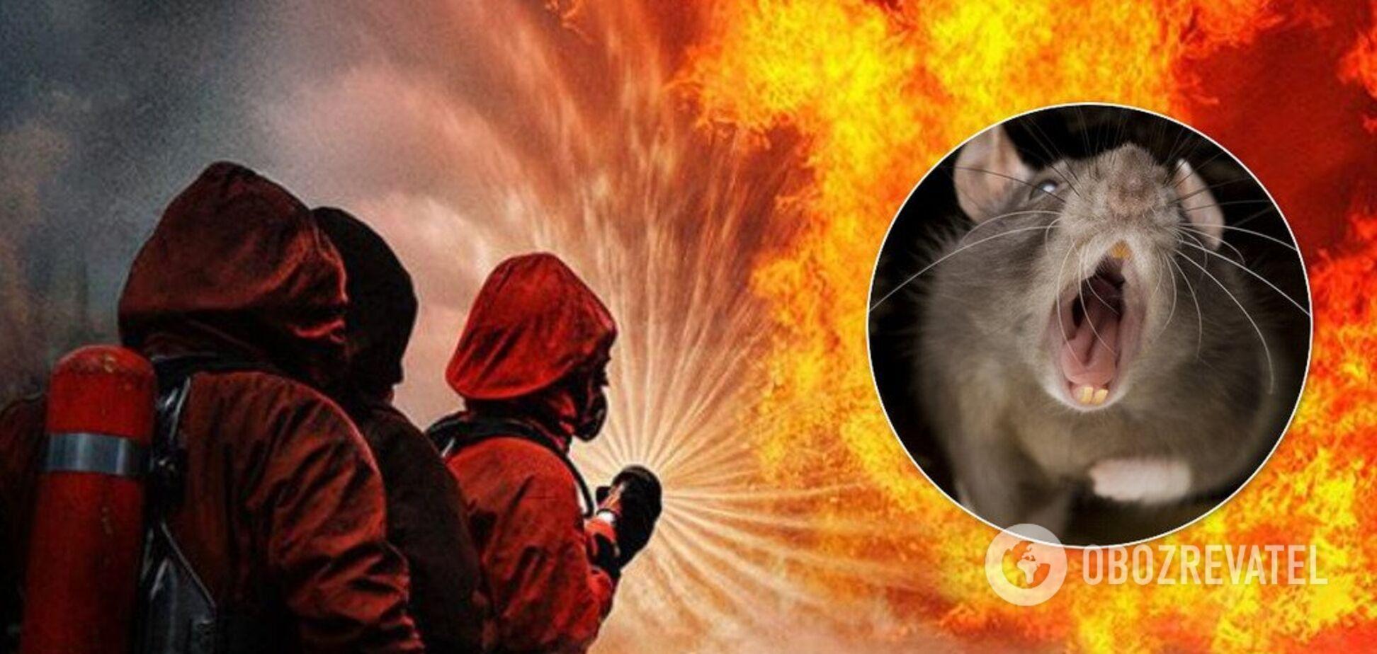 Около сотни животных погибли во время пожара в Днепре: подробности ЧП