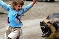 Собака прокусила лицо 10-летней школьнице: ужасное фото